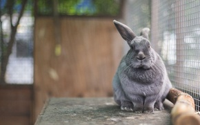 Picture rabbit, Eeyore, in a cage