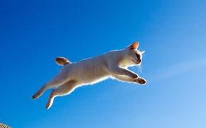 Picture cat, cat, jump, flight