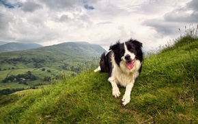 Picture dog, each, nature