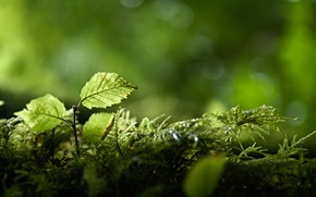 Picture greens, forest, branches, nature, foliage