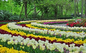 Picture design, Park, spring, tulips, beds