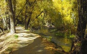 Picture autumn, track, Utah, USA, USA, autumn, path, Utah, Logan Canyon, Logan Canyon