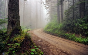 Wallpaper road, forest, fog