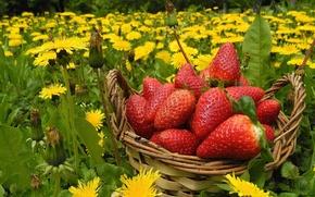Picture flowers, berries, meadow, strawberry, dandelions, basket