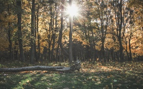Picture autumn, forest, leaves, the sun, log, Ladyzhin