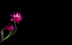 Picture light, Wallpaper, shadow, petals, stem