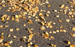 Picture autumn, asphalt, yellow leaves
