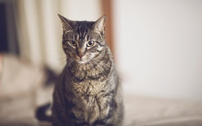 Picture cat, cat, mustache, wool, looks