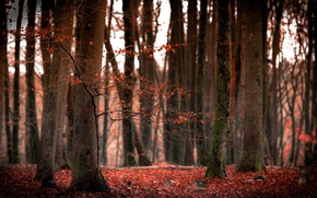 Picture nature, forest, autumn