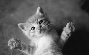 Picture mustache, paws, Koshak, black and white, Hugs