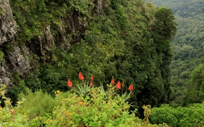 Picture Greens, Nature, Mountains, Rocks, Summer, Nature, Green, Flowers, Mountains, Summer, Gorgeous aloes, Gorgeous scarlet