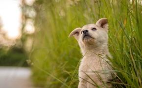 Picture grass, cute, puppy