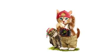 Picture cat, owl, art, children's, lorri kajenn the