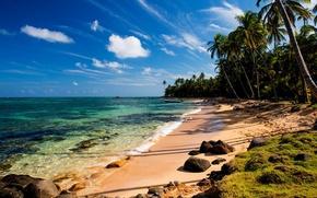Picture sand, sea, beach, tropics, stones, palm trees, moss