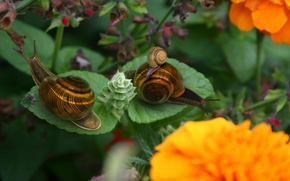 Wallpaper flowers, sheet, Snails
