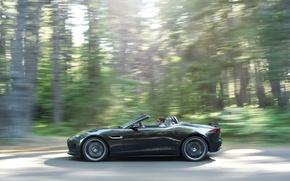 Picture forest, movement, Jaguar, convertible, side view, jaguar, f-type
