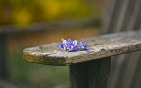 Picture flowers, bench, background