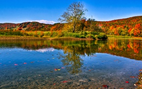 Picture autumn, forest, leaves, water, the sun, trees, lake, reflection, Canada, Quebec, Waterville