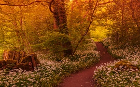 Picture forest, trees, flowers, trail
