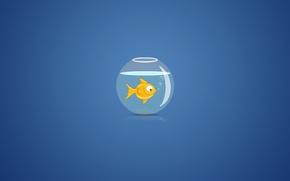 Picture water, bubbles, background, aquarium, goldfish