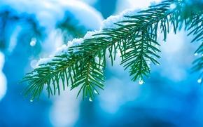 Picture macro, branch, snow, winter, Spruce, bokeh, tree, tree, needles, drops