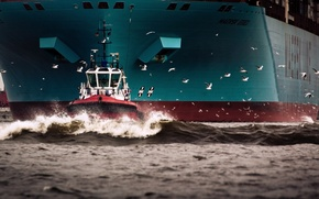 Picture Water, Sea, Board, Birds, Case, The ship, Seagulls, A container ship, Tank, Waste, Maersk, Maersk …
