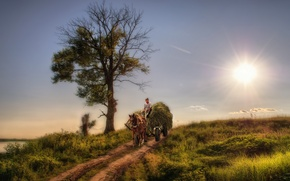 Picture wagon, beauty, horses, landscape, style