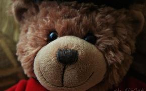 Picture toy, bear, bear, teddy bear, plush toy