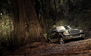 Picture forest, Ford, Expedition