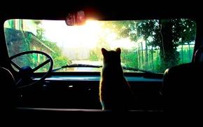 Picture machine, rain, Cat