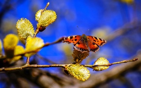 Picture the sky, nature, butterfly, branch, spring, Verba