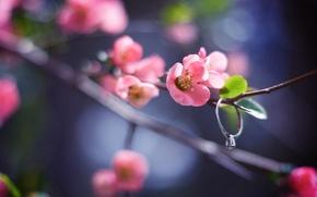 Picture flower, leaves, macro, light, nature, glare, sprig, pink, branch, spring, petals, blur, ring