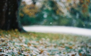 Wallpaper snowflakes, leaves, late autumn, bokeh, blur, the first snow, Tree, glare