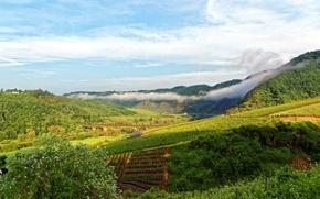 Picture mountains, bridge, river, field, Germany, plantation, Ediger-Eller