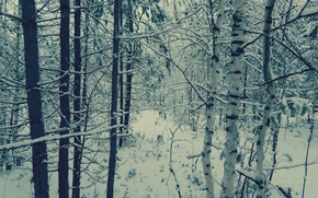 Picture winter, autumn, snow, trees, love, landscape, snowflakes, nature, mood, October, birch, 2014, Noyabrsk, YANAO, YAMAL