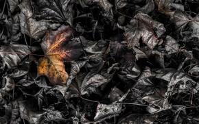 Picture leaves, macro, burning leaf