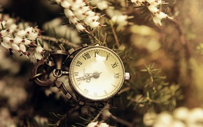 Picture flowers, needles, branches, watch, dial