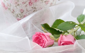 Picture roses, Pink, Roses