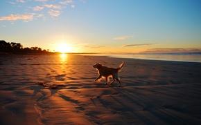 Picture sea, landscape, sunset, each, dog