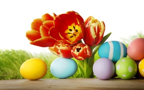 Picture grass, flowers, eggs, spring, Easter, tulips