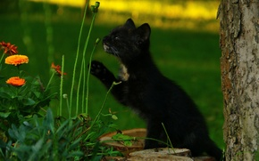 Picture grass, kitty, Black, sniffing