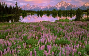 Wallpaper trees, sunset, flowers, mountains, lake, reflection, glade, pink, field