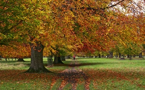 Wallpaper autumn, trees, Park