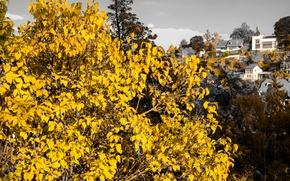 Picture Tree, Sunset, Autumn, Stuttgart, Leaves, Houses, Dusk, Hillside