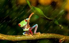 Wallpaper friendsheep, umbrella, rain, frog, colourfull, legs, rain, wood, colorful, orange eyes, red eyes, under the ...