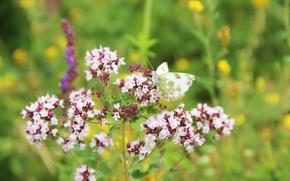 Picture purple, summer, grass, pink, butterfly, flowers purple