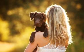 Wallpaper girl, dog, puppy, Labrador Retriever