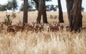 Picture field, trees, deer, wildlife