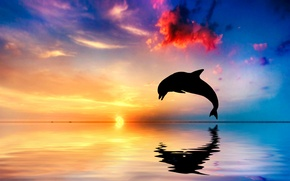 Picture sunset, Dolphin, reflection, the ocean, jump, silhouette