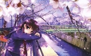 Picture Bridge, Look, Sakura, Tenderness